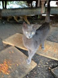 catwise feral cat blog this blog is about my mission to help
