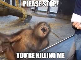 Stop It You Meme - image tagged in orangutan lmao please stop you re killing me imgflip