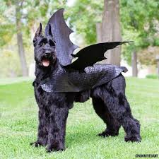 Dog Halloween Costumes Adults Pick Big Batty Dog Dragons Dog Costumes