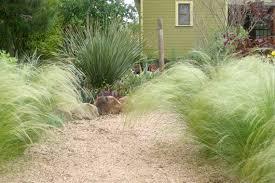 garden design garden design with the of ornamental grasses
