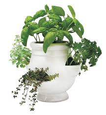 Indoor Herb Garden Kit Ready To Grow Herb Kit Best Selling Gifts Wind U0026 Weather