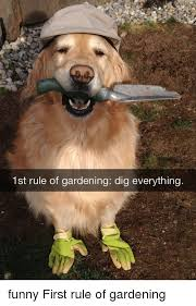 Memes And Everything Funny - 1st rule of gardening dig everything funny first rule of gardening