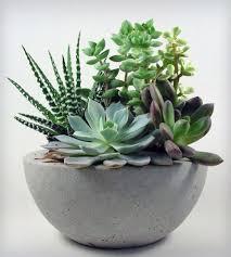 Low Bowl Planters by Concrete Bowl Concrete Bowl Concrete And Bowls