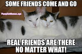 Funny Memes About Friends - real friends are there no matter what funny cat meme