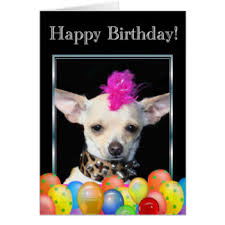 chihuahua cards greeting photo cards zazzle