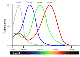 tetrachromacy wikipedia