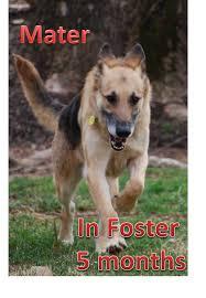 please stop breeding your pet dog mymegaedog