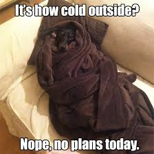 Cold Outside Meme - 17 dog pictures that perfectly sum up your hatred of winter barkpost