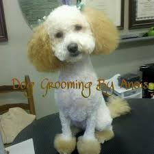 haircutsfordogs poodlemix 58 best woof pooch cuts images on pinterest poodle cuts