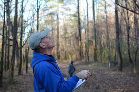 great backyard bird count ruffner mountainbirmingham audubon