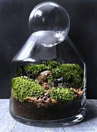 149 best terrarium terrario images on pinterest miniature