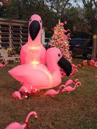 1653 best flamingo s my fav birds images on pink