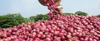 m farm a beginners guide to onion farming in kenya