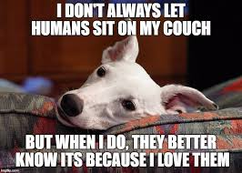 T Dog Memes - 8 funny greyhound memes what every dog deserves