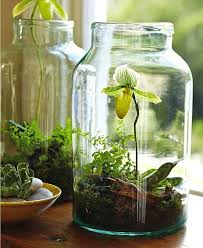 Indoor Gardening Ideas 26 Mini Indoor Garden Ideas To Green Your Home Amazing Diy