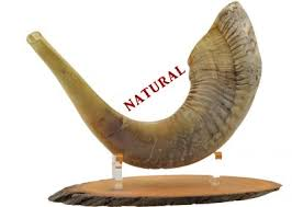 anointing horn shop for beautiful traditional ram s horn shofar of the best