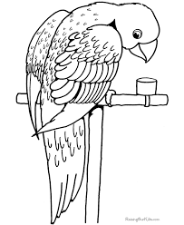 parrot coloring pages