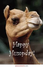 Hump Day Camel Meme - happy humpday pictures photos and images for facebook tumblr