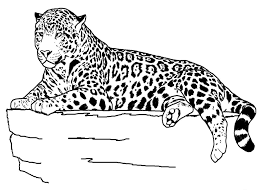 realistic animal coloring pages lezardufeu com