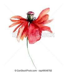 poppies flowers watercolor illustration of poppies flowers with petal fall