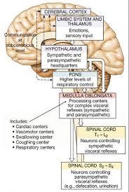 Visceral Somatic Reflex Associate Degree Nursing Physiology Review