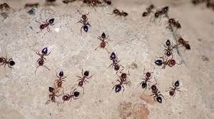 ameisen k che das große krabbeln schädlingsbekämpfung im haus gut zu wissen