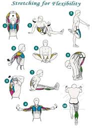 Computer And Desk Stretches Best 25 Stretching Ideas On Pinterest Yoga Sleep Yoga And