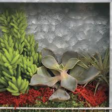 succulent plant portraits for sale at jackson and perkins