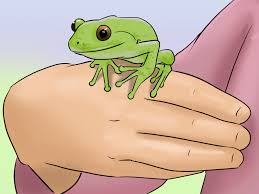 how to care for captured tree frogs 9 steps with pictures