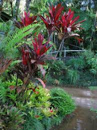 414 best tropical gardens u0026 landscapes images on pinterest