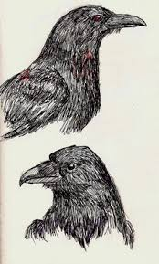 how to draw a realistic crow american crow step 17 dragoart com