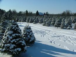 erickson bros tree farm