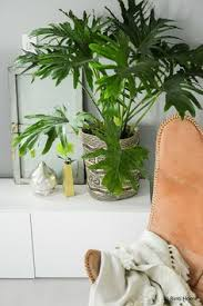 Urban Jungle Living And Styling by Urban Jungle Living And Styling With Plants By Igor Josi Https