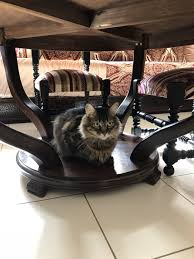 Cat Under Chair Foap Com Under The Table Images Pictures And Stock Photos