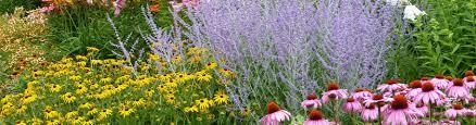 perennial plants u0026 gardens american meadows