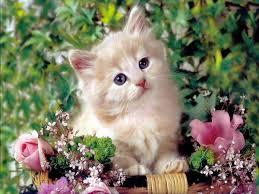 صور قطط تدحك,صور قطط,صور قطط جميلة,صور قطط حلوه Images?q=tbn:ANd9GcTpa5LkYNyn_6gmftzzKN4EueOFsR50Dol0XzONv5hkV3KsszrX