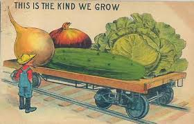 the promise of seeds magic in a packet vegetable garden harvest