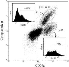 b lymphocyte development in rabbit progenitor b cells and waning