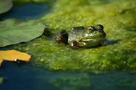 Frog Pond Backyard 20 Magical Ways To Make Your Garden A Wildlife Paradise