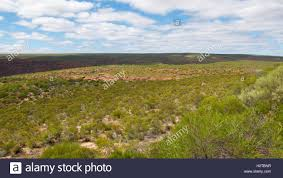 landscaping with australian native plants wide open bushland landscape in kalbarri national park with native