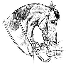 coloring pages u2013 horsemanship for women the equinest