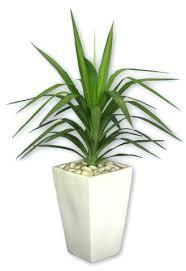 large indoor planters pots u2013 instavite me