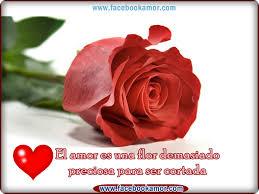 bonitas de rosas rojas con frases de amor imagenes de amor facebook rosa rojas de amor para compartir en tu muro de facebook imágenes