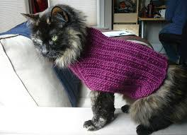 sweaters for cats 109 cats in sweaters