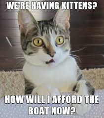 Cat Meme Boat - realization cat meme album on imgur