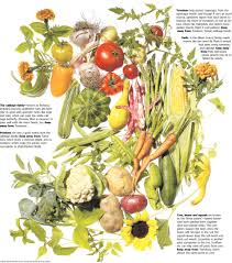 Companion Gardening Layout by Companion Planting Garden Friends And Foes Wsj