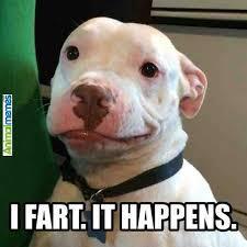 dog memes it s ok buddy check more at http www animalmemes com