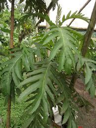 amazon rainforest native plants vi native plants living farmacy at rancho margot