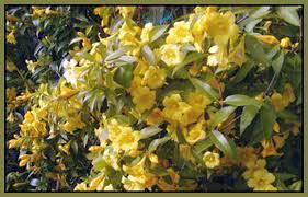 Fragrant Plants Florida - florida native emerald goddess gardens