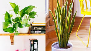 8 low maintenance indoor plants you can u0027t kill home decor
